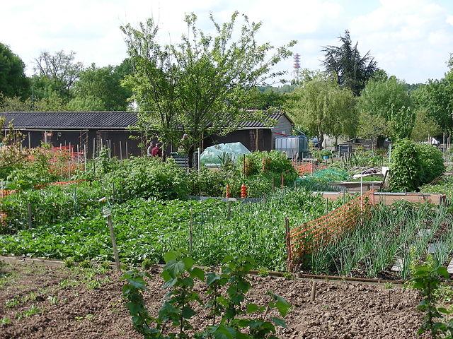 micheline jaumotte le jardin potager m me en hiver et qu est ce que la permaculture micro. Black Bedroom Furniture Sets. Home Design Ideas